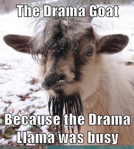Drama Goat
