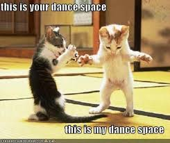 "kitties dancing with ""dance space"" quote from Dirty Dancing"